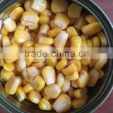 SWEET CORN, DRY SWEET CORN, canned sweet corn, fresh sweet corn, sweet corn in drum, sweet corn in brine