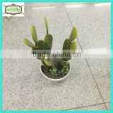 25cm high quality artificial cactus plant with ceramics pot                                                                         Quality Choice