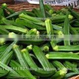 fresh okra export/ladys finger exporter in india/vegetable supplier