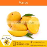 Highly Demanded Pesticide Free Natural Farm Mango Available at Really Low Price