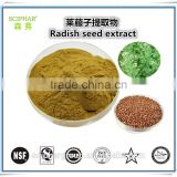 Best Quality Herbal Radish Seed Extract Powder ISO and Kosher Sciphar free sample