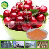 100% organic acerola cherry extract powder
