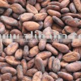 New season's cacao/cocoa beans/nibs/seeds,directly from our farm