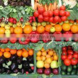 High Quality Exquisite Classic Fresh vegetables