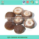 New crop Chinese wholesale dried shiitake mushroom