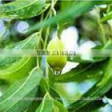 100 % Natural Pure Neem Oil for Wholesale supplie