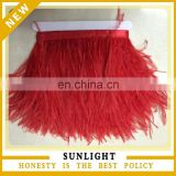 Top Quality Party Decoration13-15cm Ostrich Feather Trim/Ostrich Feather Fringe
