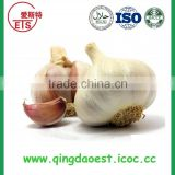 shandong JINXIANG 4.5-5.0 5.0-5.5 cm fresh with high quality healthy normal white garlic
