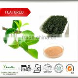 100% Natural Green Tea Extract, wholesale Green Tea Extract Powder, 99% Theanine