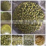 sprouting green mung beans NE origin