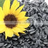 SUNFLOWER CONFECTIONARY SEEDS
