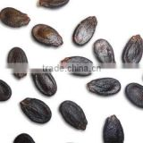 Supply black watermelon seed with good quality for sale