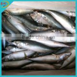 Whole round frozen mackerel fish from frozen fish factory