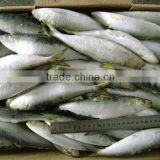 Good quality frozen sardine seafood fish 130g