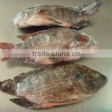 tilapia fish food machine for producing gutted and scaled fish