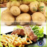 certified fresh dutch sweet potato 100-200g price for export
