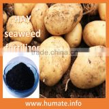 Plant Growth Regulator alga kelp extract pupuk organic seaweed fertilizer with trace element nutrient