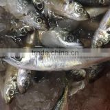 Chinese Frozen seafood/Frozen Fish Factory