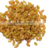 INDIAN DRIED GRAPES