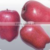 Chinese Red Apple For 2011 New Crop