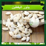 Raw Pumpkin seeds Shine skin Pumpkin Seeds