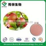 Wholesale Pomegranate Juice Powder Bulk Pomegranate Fruit Powder