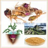 maca root/maca root powder/maca root extract