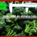 Best price IQF frozen broccoli