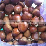 2015 health food Fresh chinese sweet chestnuts/frozen chinese food