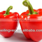 New Red Round Sweet Pepper Exporter