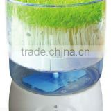 Wheat grass and Bean Sprout Growing Machine