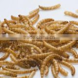 Wholesale Bulk Dried Mealworms for Pet Snacks Chicken Feed