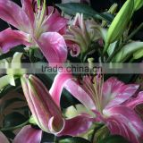 Newest fresh cut flowers fragrant lily flowers for banquet decoration or wedding decoration