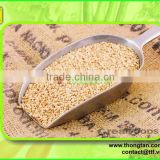 White sesame seed from Vietnam( Thongtan foodstuff)