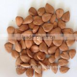 Supply with Chinese Bulk Sweet Apricot Kernels Longwang with good quality for Sales