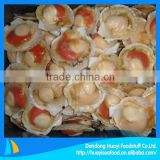 Supply new season scallop frozen half shell scallop price