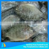 high quality fresh frozen whole tilapia