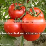 Tomato Extract(Fine Red Powder)