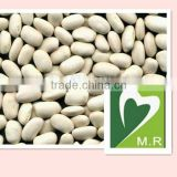 Dried white kidney bean extract powder-Phaseolin1%, 2%,10:1 4:1