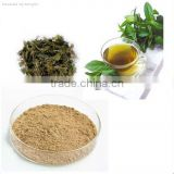 High-quality Green Tea Extract Camellia sinensis with Tea Polyphenols 98% and EGCG 80%