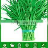 WS03 Guanglian green peduncle water spinach seeds for planting
