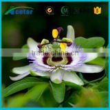 High quality pure passion flower extract herbs