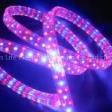 I'm very interested in the message '108 LED beads/M Red &Yellow&Blue light LED Strip & led rainbow strip' on the China Supplier