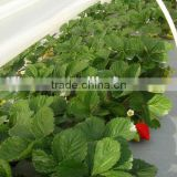 Plastic Greenhouse Film Agricultural Film for Berry