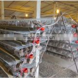 galvanized high quality wire mesh quail cages for sale