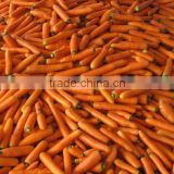 fresh vegetables baby carrots 2014