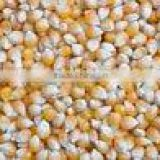 Yellow Maize Best Quality - Animal Feed