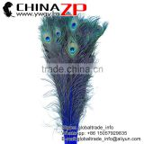 ZPDECOR Best Quality Plume Wholesale Full Eye Dyed Royal Blue Peacock Feathers for Gifts