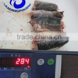 Canned Fish Product Best Price Canned Jack Mackerel in Water and Salt Added