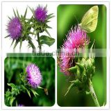water soluble milk thistle extract/milk thistle dry extract/milk thistle extract water soluble silymarin